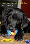 Hullu, Ondine de - Drukke pup? Daar is iets aan te doen!