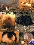 De Grote Cavia - Caviapaspoort